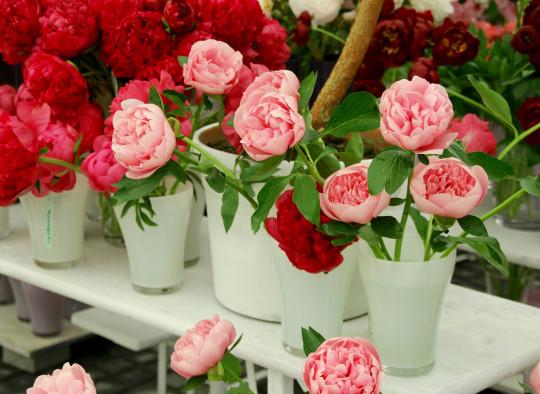 rose  fleur fleuriste stage formation bouquet fete des mere saint valentin